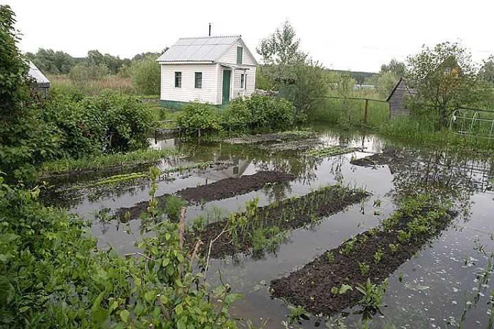 Дренаж на участке с высоким уровнем грунтовых вод